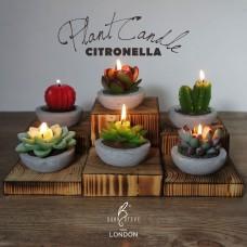Decorative Plant Citronella Candle Collection - 6 pcs